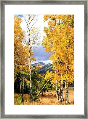 Rocky Mountains In Autumn Aspens Framed Print by Dan Sproul