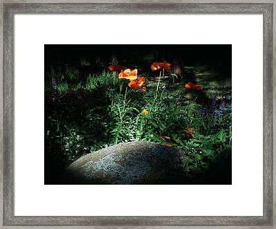 Rocky Mt. Poppies  Framed Print