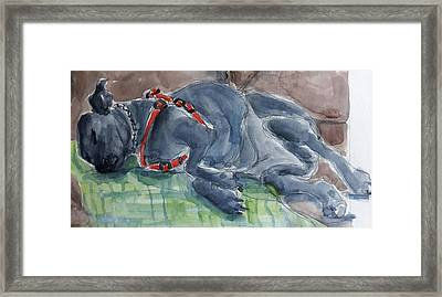 Rocky Napping Framed Print by Janet Butler