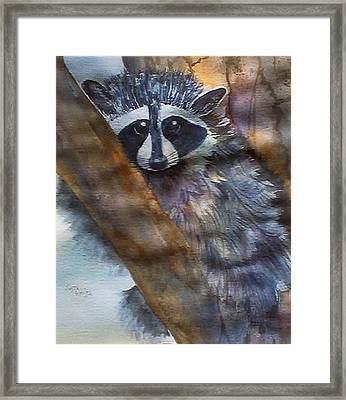 Rocky Racoon Framed Print