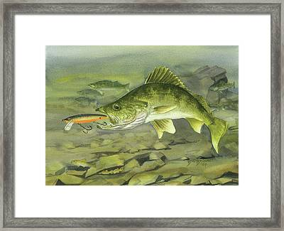 Rocky Reef Walleye Framed Print by Bud Bullivant