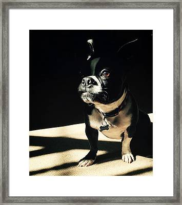 Framed Print featuring the photograph Rocky by Sharon Jones