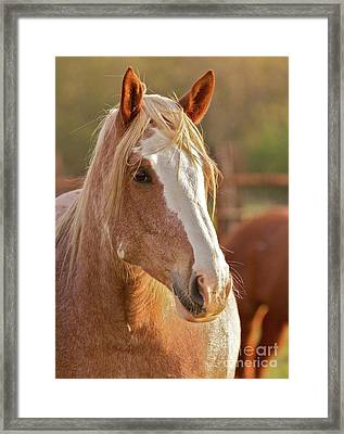 Rodeo Bronc Beauty Framed Print by Gus McCrea