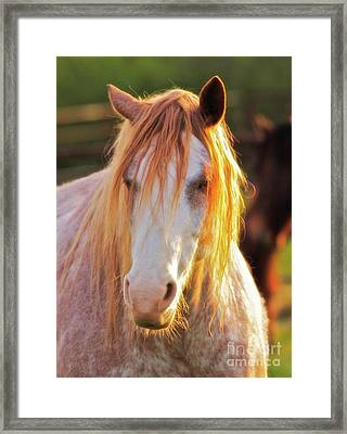 Rodeo Bronc Grunge Framed Print by Gus McCrea