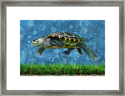 Rodney The Diamondback Terrapin Turtle Framed Print