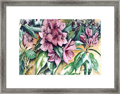 Rododendron Time Framed Print by Marta Styk
