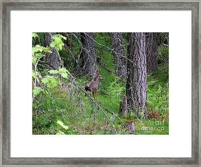 Roe Buck - Still Framed Print by Phil Banks