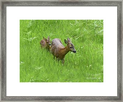 Roe Doe With Fawn Framed Print by Phil Banks