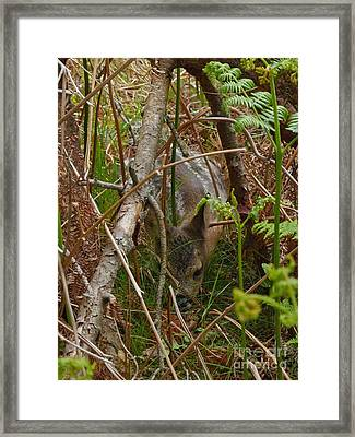 Roe Deer Fawn Framed Print by Phil Banks