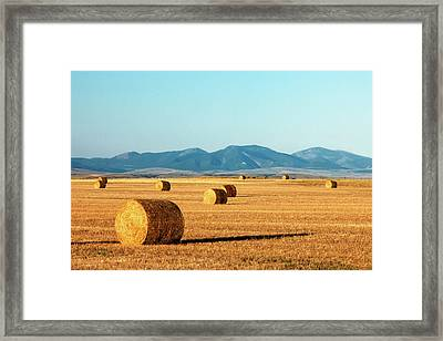 Rolled Gold Framed Print by Todd Klassy