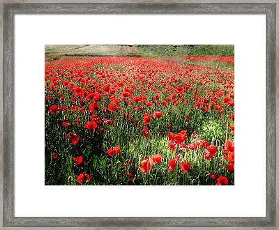 Rolling Fields With Poppies Framed Print