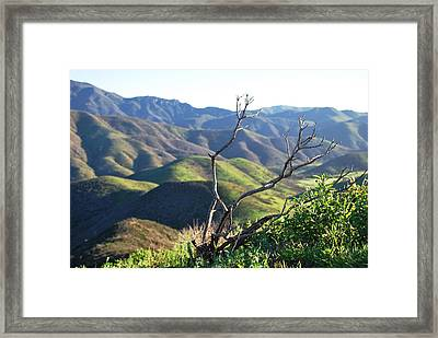 Framed Print featuring the photograph Rolling Green Hills With Dead Branches by Matt Harang