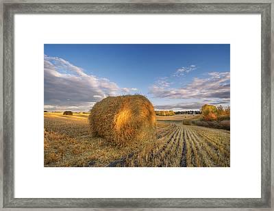 Rolling Hills Framed Print by Dan Jurak