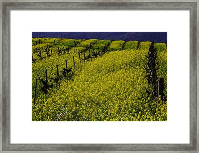 Rolling Hills Of Mustard Grass Framed Print by Garry Gay