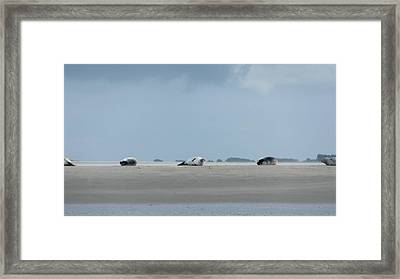 Rolling Seals Framed Print by Marc Philippe Joly