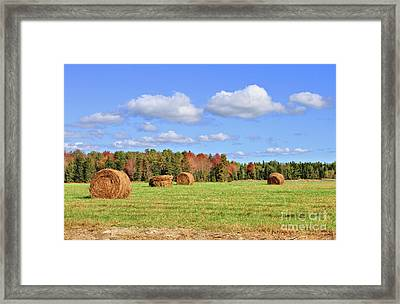 Rolls Of Hay On A Beautiful Day Framed Print