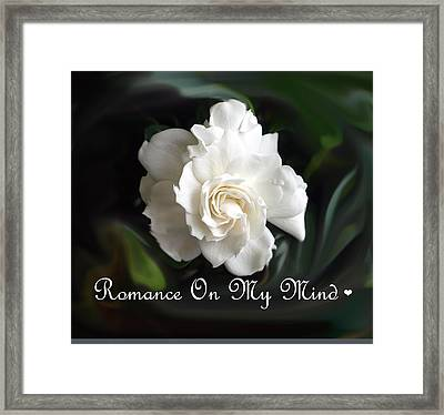 Romance Rose Framed Print by Kim