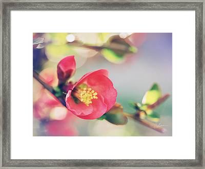 Romancing Spring II Framed Print