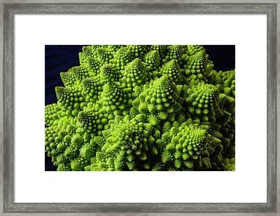 Romanesco Broccoli Framed Print by Garry Gay