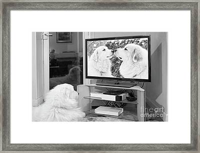 Romantic Dogs Framed Print