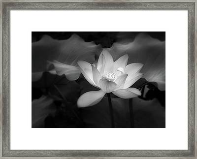 Romantic Lotus By Night Black And White Framed Print