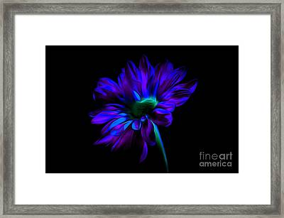 Romantic Nights Framed Print by Krissy Katsimbras