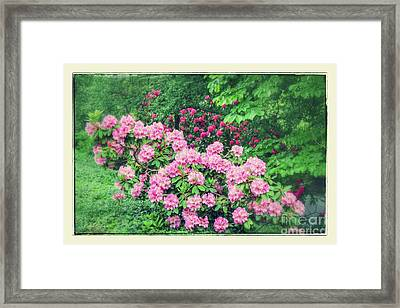 Romantic Rhododendrons Framed Print