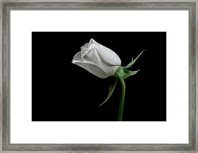 Romantic Rose Framed Print by Elsa Marie Santoro