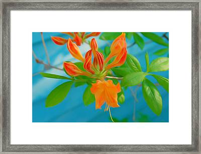 Framed Print featuring the photograph Romantic Skies Budding Azalea by Aimee L Maher Photography and Art Visit ALMGallerydotcom