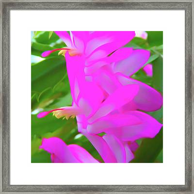 Framed Print featuring the photograph Romantic Skies Christmas Cactus Flower by Aimee L Maher Photography and Art Visit ALMGallerydotcom