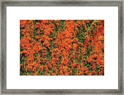 Romantic Skies Orange Parade Framed Print