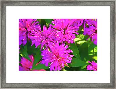 Romantic Skies Pink Petals Framed Print