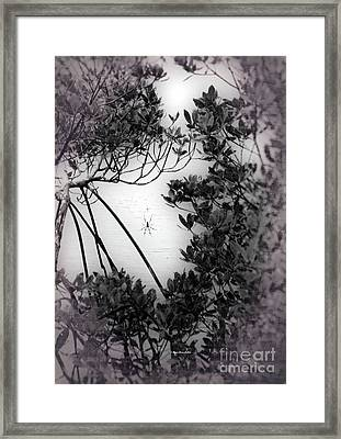Framed Print featuring the photograph Romantic Spider by Megan Dirsa-DuBois