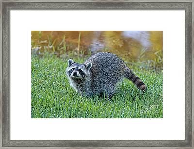 Romp By The Pond Framed Print