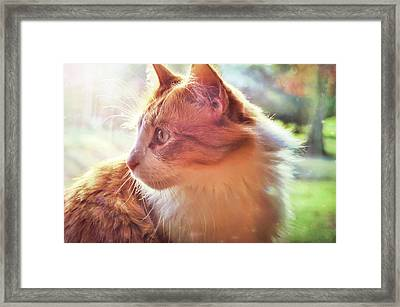 Ronald Framed Print by JAMART Photography