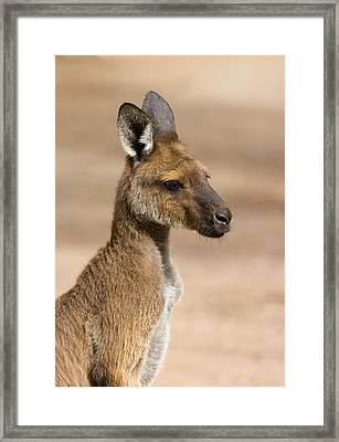 Roo Portrait Framed Print by Mike  Dawson