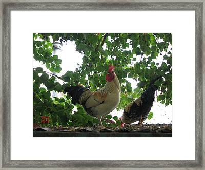 Rooftop Roosters Framed Print