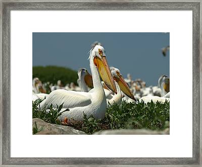 Rookery Framed Print by James Peterson