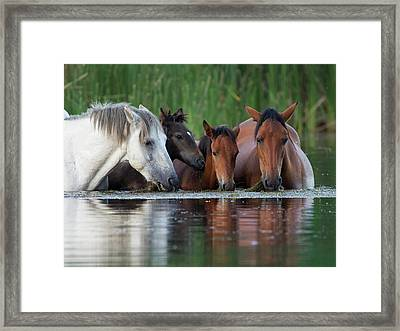 Room For All Framed Print by Sue Cullumber