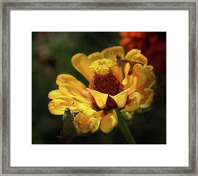 Framed Print featuring the digital art Room For More by Kim Henderson