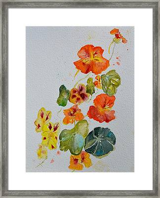 Room To Move Framed Print by Beverley Harper Tinsley