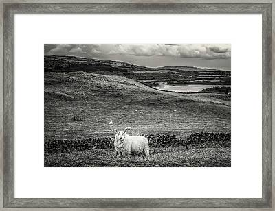 Room To Roam Framed Print
