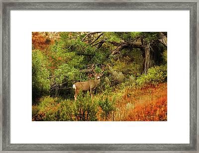 Roosevelt Deer Framed Print