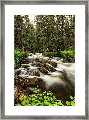 Roosevelt National Forest Stream Portrait Framed Print