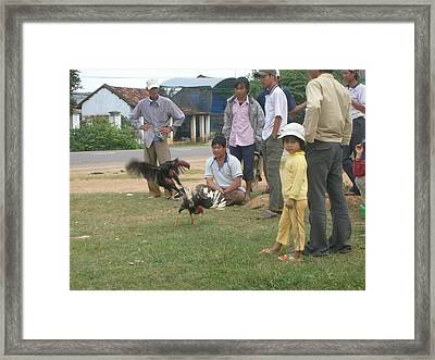 Rooster Figth  Framed Print