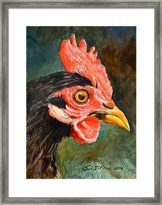 Rooster Framed Print by Joni Dipirro