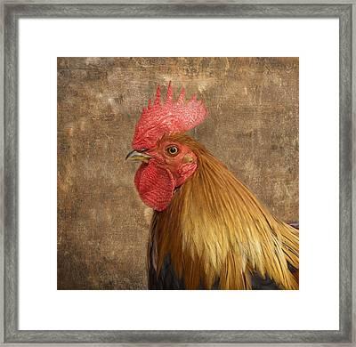 Rooster Framed Print by Kim Hojnacki