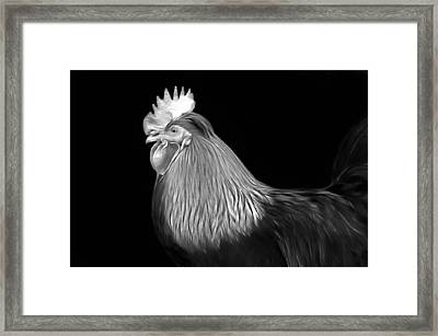 Rooster Framed Print by Marion Johnson