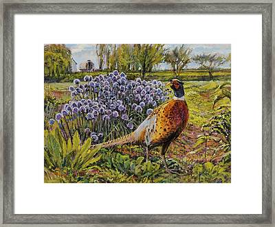 Rooster Pheasant In The Garden Framed Print