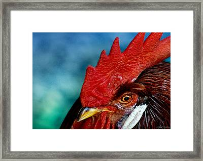 Rooster Framed Print by Robert Lacy
